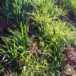 Plantations agro-sylvo-pastorales