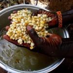 Maïs pour la préparation des tortillas