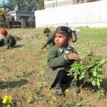 Sensibilisation au jardinage dans une école
