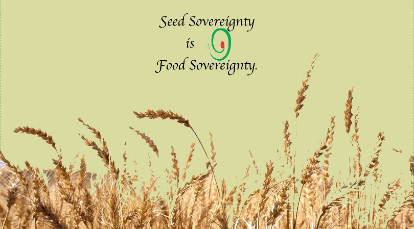 Logo-Seedfreedom