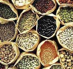 graines-semences-bio