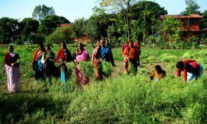 Farmer contribution in navdanya