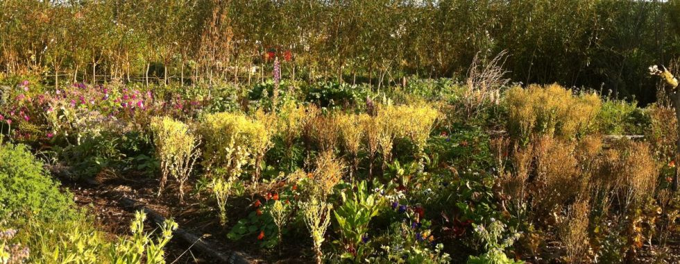 Jardin de semences