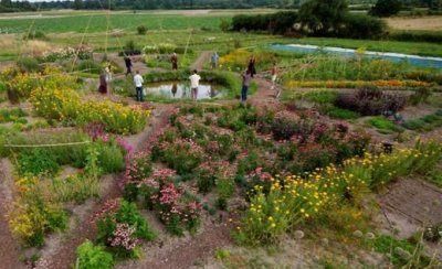 Jardin-Mandala3