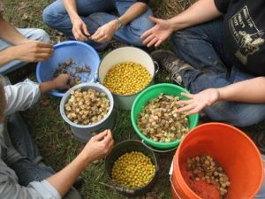 community-seed-saving-workshop-ground-cherries-800x600