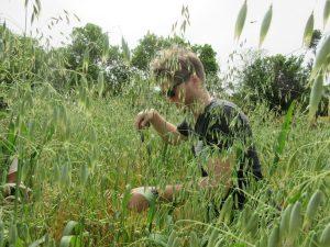 Radish harvesting BD