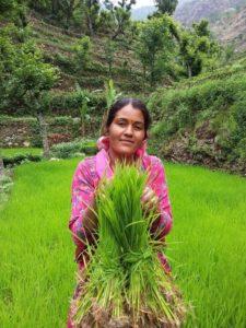 Paddy Planting festival (6)