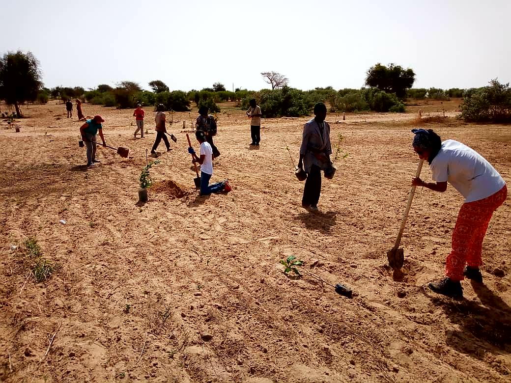 Juillet 2018 - Plantation des arbres fruitiers