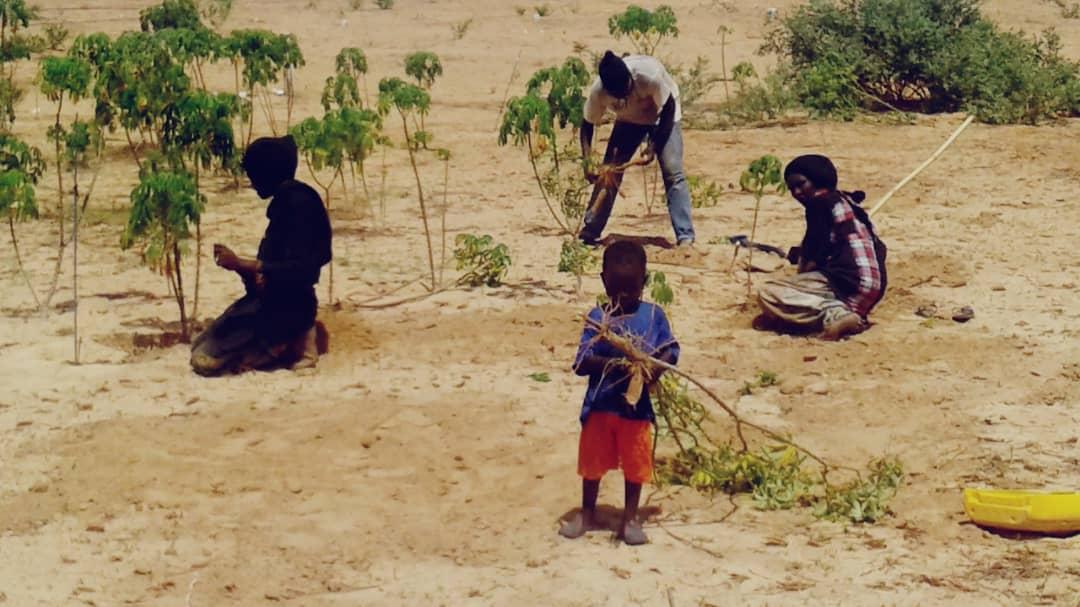Août 2018 - Démultiplication du champ de manioc dans la grande ferme