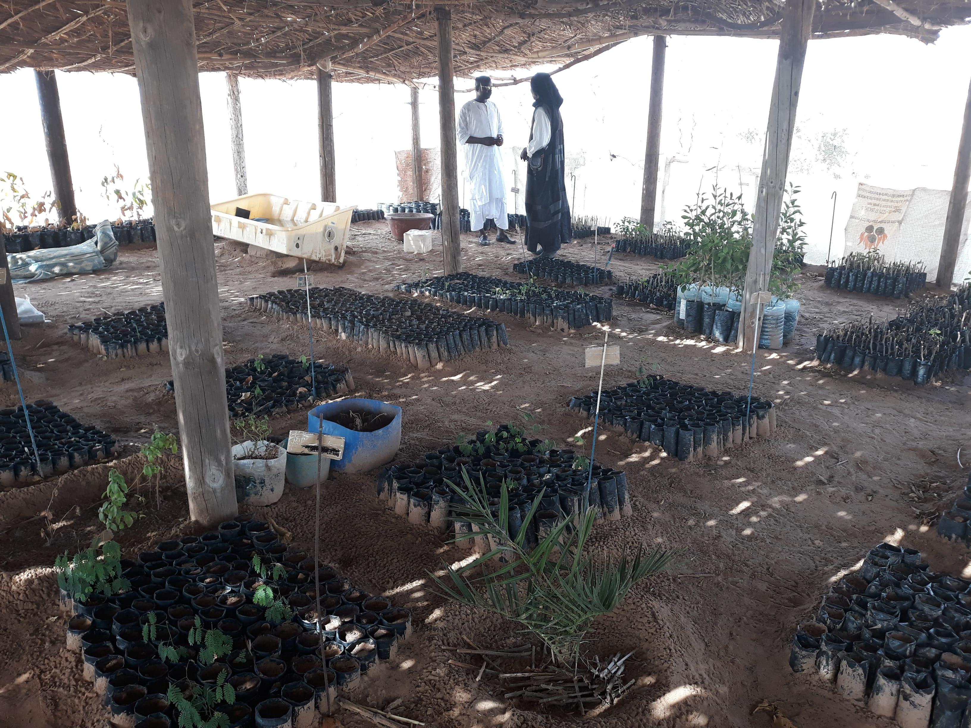 Pépinière du projet Biofermes Sénégal