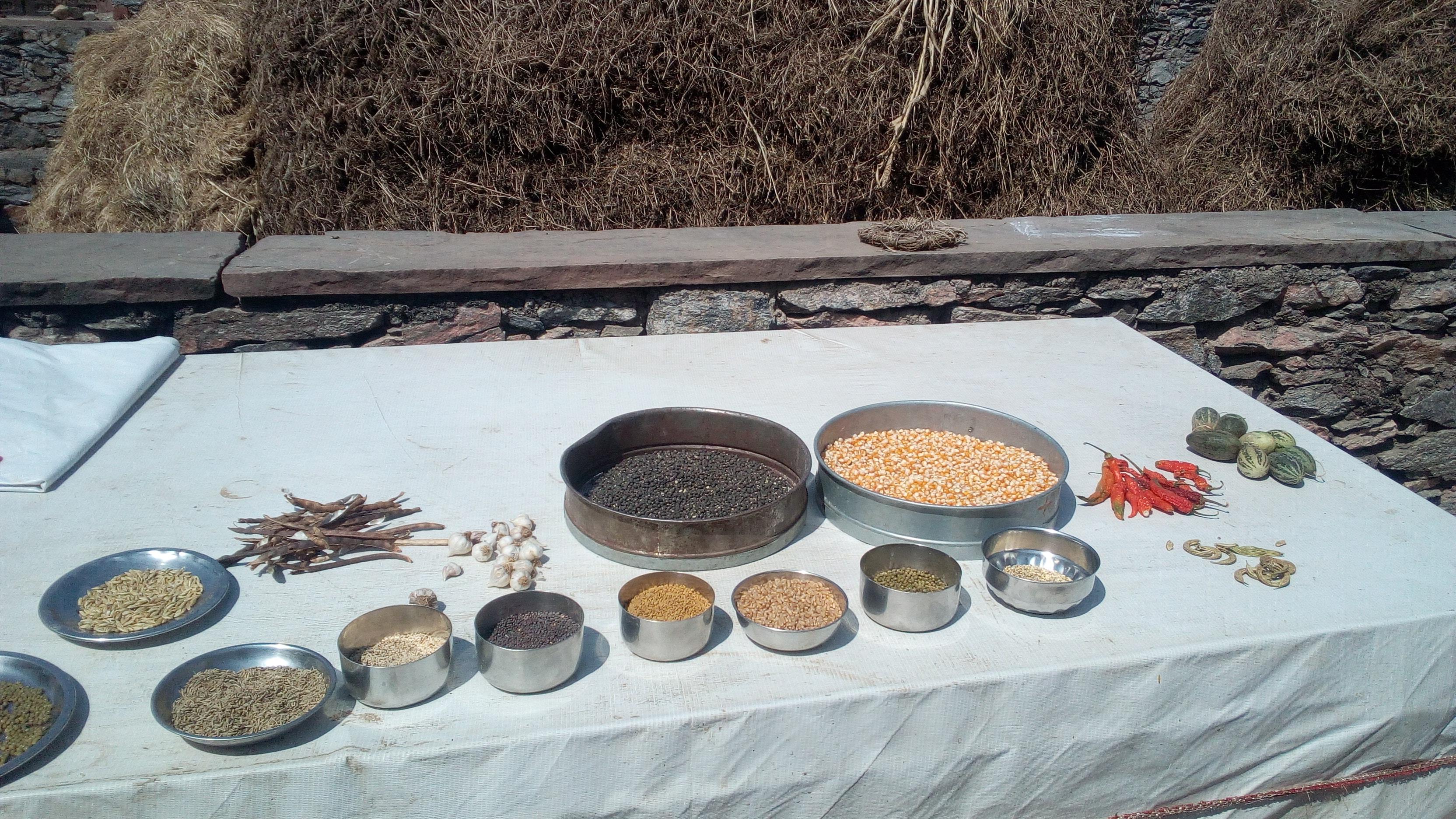 Semences paysannes - Navdanya