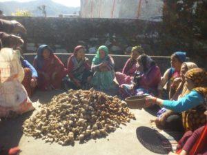 Turmeric seed distribution in Rudraprayag