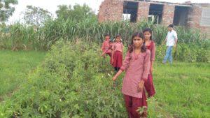 Veg. garden, Adarsha Bal Kalyan school, Borkhandi kala, RJ