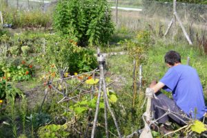 jardinage 5