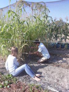 Travail dans le jardin de semence de la Ferme Sainte-Marthe Sologne