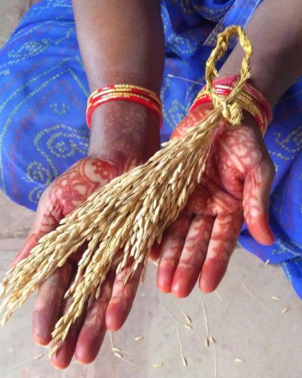 Sheela devi showing seed varieties
